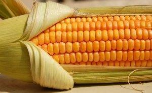 - Калорийность кукурузы, полезные свойства